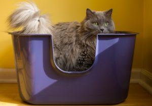 Как делать массаж при запорах у кошки