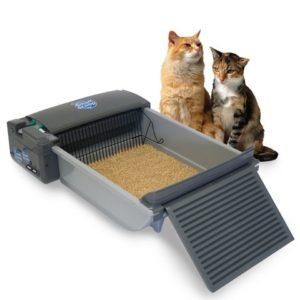 Как выбрать хороший лоток для кошки