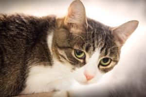 дисбактериоза у кошек