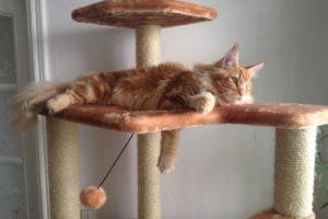Как выбрать когтеточку для котенка
