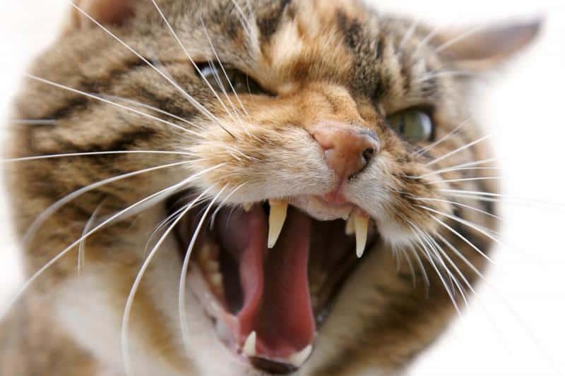 Как можно успокоить агрессивного кота