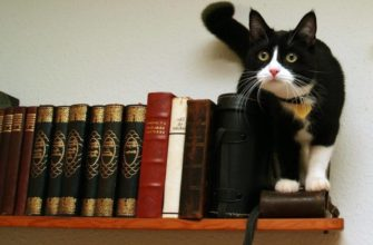 Опасные домашние предметы для кошки